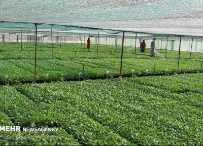 راه اندازی سامانه رصد فراوری 3محصول کشاورزی