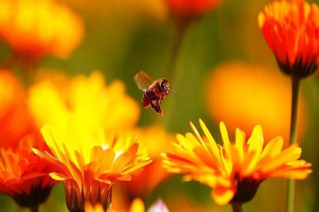 هوای زنبورها را در فصل سرما داشته باشیم
