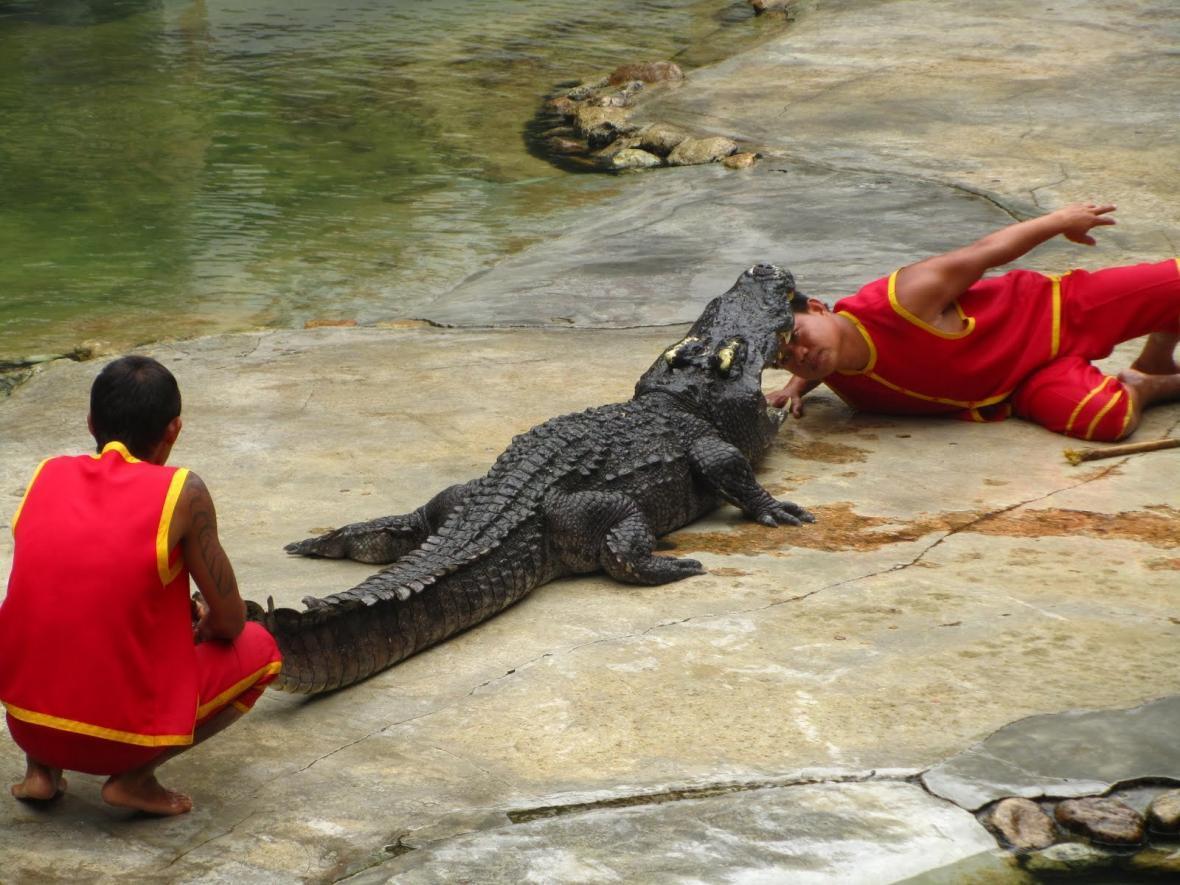 باغ وحش و پرورشگاه تمساح در بانکوک تایلند