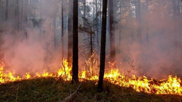 آتش سوزی در ارتفاعات سربیژن جیرفت