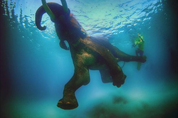شنا به همراه فیل ها و کوسه ها