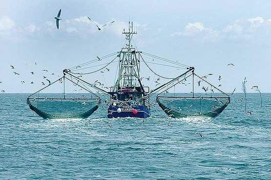 عدم ابلاغ رسمی ممنوعیت صید ترال فانوس ماهیان به محیط زیست