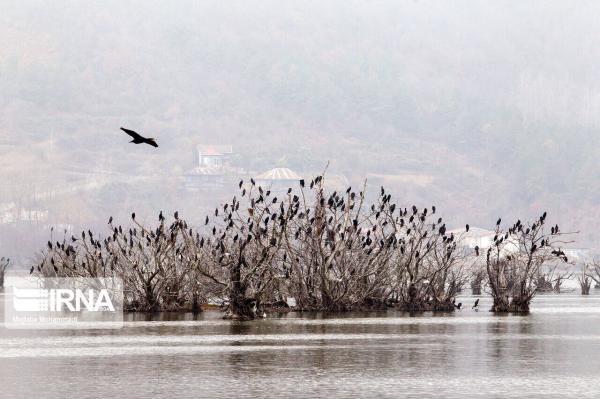 خبرنگاران حدود 20 هزار بال انواع پرنده در تالاب های مهاباد سرشماری شد