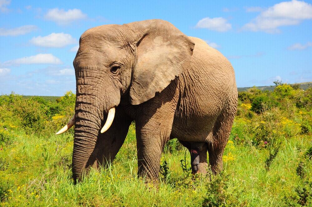 پارک طبیعت فیل تایلند